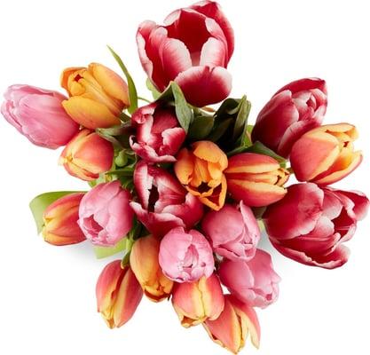 M-Classic Tulpen Harlekin 20er