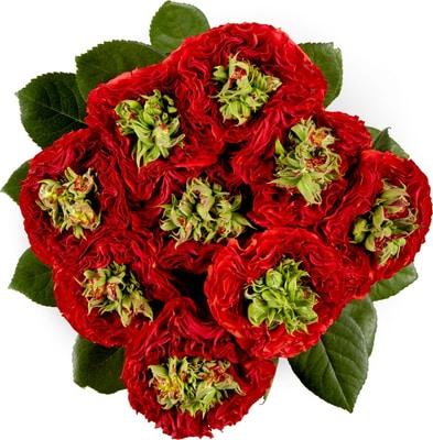 Roses Nostalgie 9pc