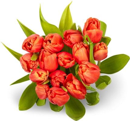 Tulpen Bund 15er