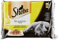 Sheba Selection Salsa pollame