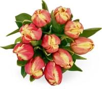 Toutes les tulipes M-Classic, le bouquet de 10