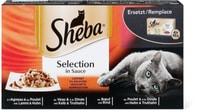 Sheba Selection in Sauce Komposition
