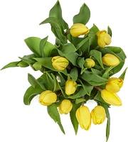 Tulipes, le bouquet de 15