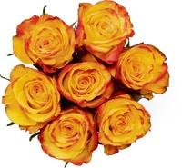 Rose nobili Fairtrade, mazzo da 7