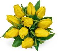 Alle M-Classic Tulpen, Bund, 10 Stück