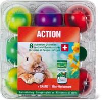 Uova di Pasqua svizzere da allevamento all'aperto