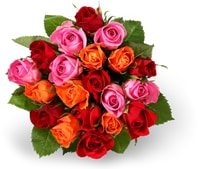 Tous les trios de mini-roses Fairtrade