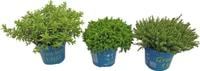 balkon beetpflanzen fr hlingsflor herbstflor sommerflor und vieles mehr migros. Black Bedroom Furniture Sets. Home Design Ideas