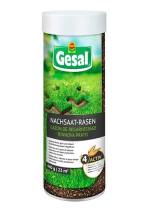 Nachsaat-Rasen, 440 g