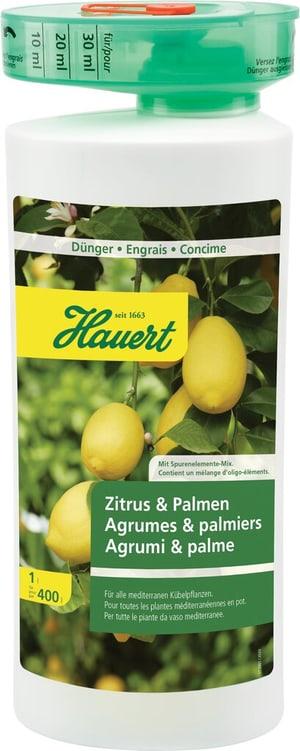 Zitrus & Palmen, 1 l