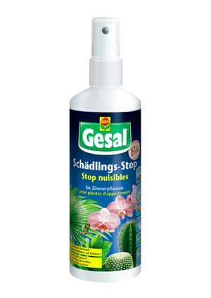 Schädlings-Stop für  Zimmerpflanzen, 250 ml