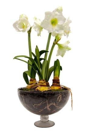 Pianta artificiale Amaryllis, bianco, in vaso di vetro, H84cm