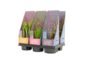 Garten Orchideen Mix (6er Set) Ø12cm