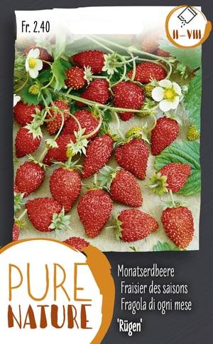 Monatserdbeere 'Rügen' 25g