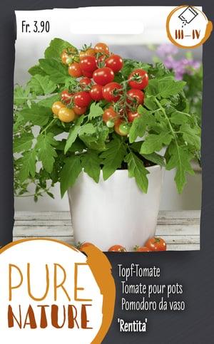 Topf-Tomate 'Rentita' 0.25g