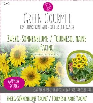 Maxi Garten Zwerg-Sonnenblume 'Pacino'