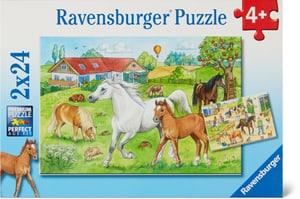 Au centre équestre Puzzle