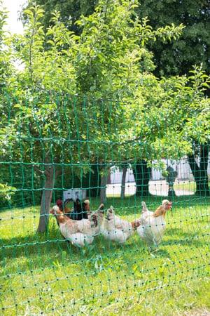 Filet clôture à volaille 25 m /112cm vert, avec piquets, non électrique