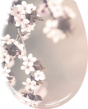 Blossom Nelke