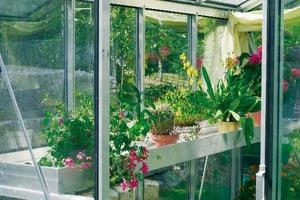 HELIOS Auge à plantes