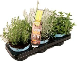 Composizione di erbe aromatiche bio (set da 3) Ø 12 cm