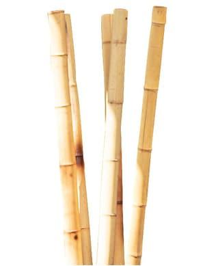 Bambusrohr