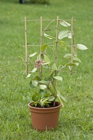 Bambus-Blumenstütze