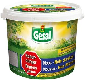 Rende forte e resistente il prato, garantisce un nutrimento per 6 settimane, 7,5 kg