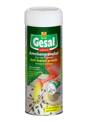 Ameisengranulat, 300 g