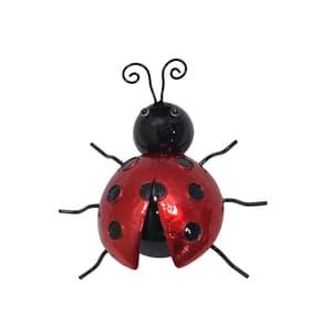 Coccinella decorativa