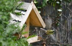 Mangeoire pour oiseaux VILLA