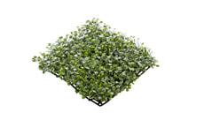 Buxusteppich grün