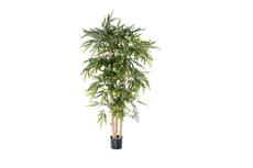 Bambou massif tige