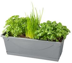 Bio Insalata di erbe scatola