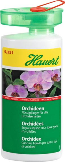 Orchideen, 0,25 l