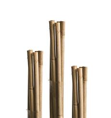 Bambusstäbe 60cm