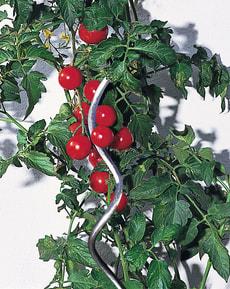 Tomatenspirale