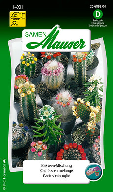 Cactus miscuglio