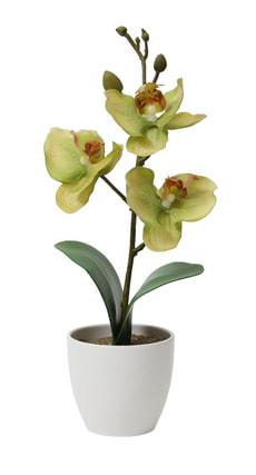 Orchidée dans le pot, verte