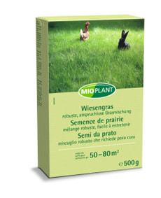 Semence de prairie, 500 g