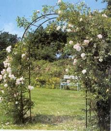 Arche pour rosiers