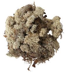 Lichen finlande blanc 50g