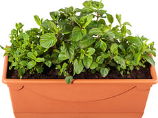 Bio erbe di te scatola