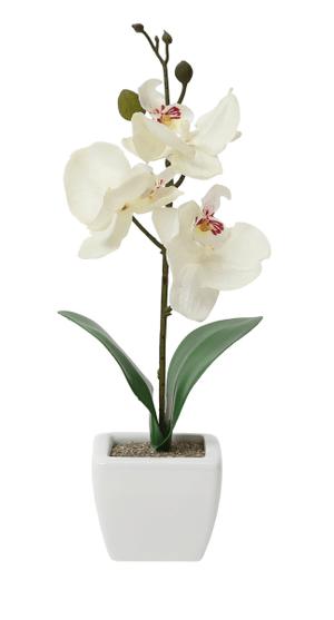 Art Orchidée dans le pot, verte