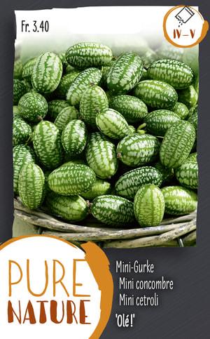 Mexikanische Mini-Gurke 'Olé!' 50 Korn