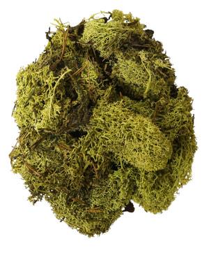 Lichen finlande vert foncé, 50g