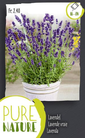 Lavende vraie, vivace 0.5g
