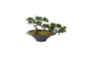 Pianta artificiale, cedro bonsai