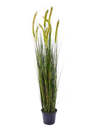 Plante artificielle cordaderia brun/vert