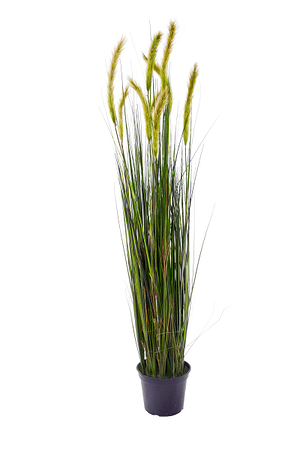 Kunstpflanze Cordaderia braun / grün